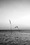 Zonsondergang op het Overzees Royalty-vrije Stock Afbeeldingen