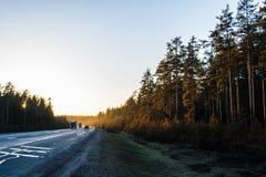 Zonsondergang op het spoor ` Scandinavië ` Royalty-vrije Stock Foto