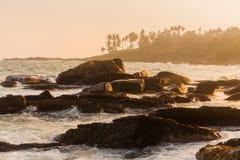 Zonsondergang op het strand met kokospalmen Royalty-vrije Stock Fotografie
