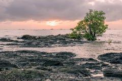 Zonsondergang op het strand met rotsen en boom royalty-vrije stock foto