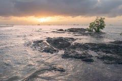Zonsondergang op het strand met rotsen en boom royalty-vrije stock afbeeldingen