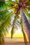 Zonsondergang op het strand van Caraïbische overzees Stock Afbeeldingen