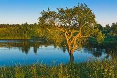 Zonsondergang op kust van de rivier Stock Afbeeldingen