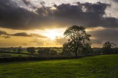 Zonsondergang op landbouwbedrijfgebieden met boom en mooie bewolkte hemel, Cornwall, het UK Stock Fotografie