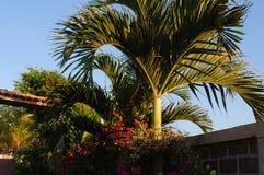 Zonsondergang op palm Stock Afbeelding
