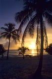 Zonsondergang op palmen bij strand Bayahibe Stock Foto