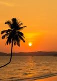 Zonsondergang op tropisch strand met silhouetpalm Royalty-vrije Stock Foto's
