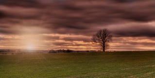 Zonsondergang op wolds Lincolnshire met boom Royalty-vrije Stock Foto's