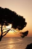 Zonsondergang over boom en overzees Royalty-vrije Stock Afbeeldingen