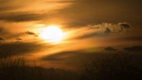 Zonsondergang over de Bomen en de Wolken Geschoten op Canon 5D Mark II met Eerste l-Lenzen stock video