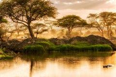 Zonsondergang over de rivier in Serengeti, Tanzania royalty-vrije stock foto