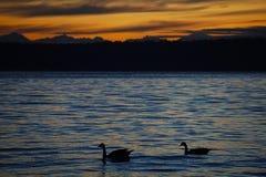 Zonsondergang over de Vreedzame oceaan stock foto