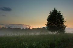 Zonsondergang over de weide met mist Royalty-vrije Stock Afbeelding