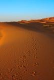 Zonsondergang over de woestijn van de Sahara Royalty-vrije Stock Afbeeldingen