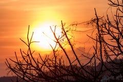 Zonsondergang over droge tak Stock Afbeeldingen