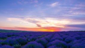 Zonsondergang over een Gebied van Lavendel stock videobeelden