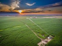Zonsondergang over gebied van gewassen in Colorado Royalty-vrije Stock Foto
