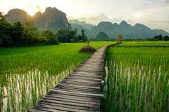 Zonsondergang over groene padievelden in Vang Vieng, Laos Stock Afbeeldingen