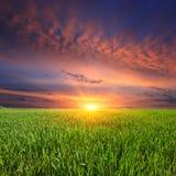Zonsondergang over groene weide Royalty-vrije Stock Afbeeldingen
