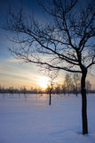 Zonsondergang over het gebied. Royalty-vrije Stock Afbeeldingen