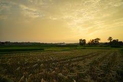 Zonsondergang over het gebied na oogst Royalty-vrije Stock Afbeelding