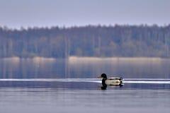 Zonsondergang over het meer Royalty-vrije Stock Foto