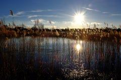Zonsondergang over het meer in backlight met sumbeam en riet Royalty-vrije Stock Afbeelding