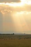 Zonsondergang over het meest wildebeest Royalty-vrije Stock Afbeeldingen