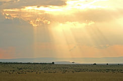 Zonsondergang over het meest wildebeest Stock Afbeeldingen