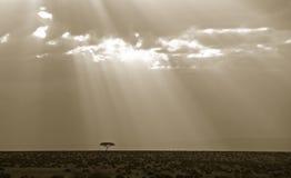 Zonsondergang over het meest wildebeest Stock Fotografie