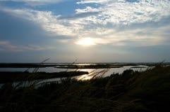 Zonsondergang over het moerasland Stock Afbeeldingen