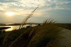 Zonsondergang over het moerasland Stock Afbeelding