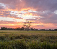 Zonsondergang over het padieveld Stock Fotografie