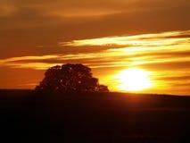 Zonsondergang over heuvel met luifel van eiken boom Stock Fotografie