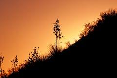Zonsondergang over installaties in woestijn Royalty-vrije Stock Foto's