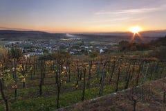 Zonsondergang over Italiaanse wijngaard op de herfst stock foto's