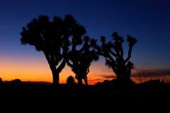 Zonsondergang over Joshua Tree, Joshua Tree National Park Stock Foto