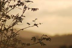 Zonsondergang over mooie eenzame boom royalty-vrije stock foto