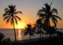 Zonsondergang over overzees en palmen stock foto's