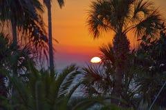 Zonsondergang over Palmen Stock Foto