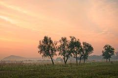 Zonsondergang over plattelandsbomen Stock Foto