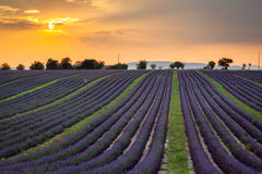 Zonsondergang over rijen van lavendel dichtbij Valensole, de Provence, Frankrijk Royalty-vrije Stock Foto