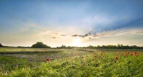 Zonsondergang over rode papavers in het Italiaanse platteland stock foto