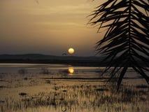 Zonsondergang over Siwa-Oase royalty-vrije stock afbeelding
