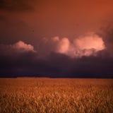Zonsondergang over tarwegebied Stock Foto's
