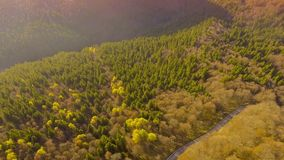 Zonsondergang over weg door kleurrijk de herfstbos stock video