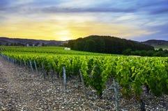 Zonsondergang over wijngaarden van Beaujolais, de Rhône, Frankrijk Stock Fotografie