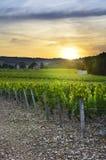Zonsondergang over wijngaarden van Beaujolais, de Rhône, Frankrijk Stock Afbeeldingen