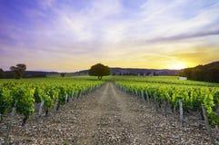 Zonsondergang over wijngaarden van Frontenas-dorp, Beaujolais, Frankrijk Stock Afbeelding