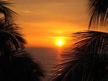 Zonsondergang in Palmen Stock Foto